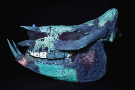 By illuminating the specimen with UVC light and applying a Midwest Optical Systems LA120 filter, however, the different minerals in the rhino skull become immediately obvious providing researchers with an indication that the skull was reconstructed and contains major portions (all dark areas) of artistic plaster fill and sculpture