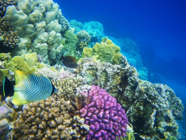 Assessing Coral Health with Hyperspectral Imaging