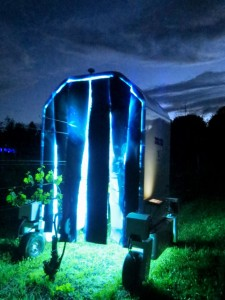 The UV light robot named Thorvald, applies treatment on grape vines in a Cornell AgriTech research field at night Image by David Gadoury