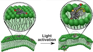 Motorized molecules that target diseased cells may deliver drugs or kill the cells by drilling into the cell membranes The illustration shows a motorized molecule sitting atop a cell membrane left and molecules activated by ultraviolet light drilling into