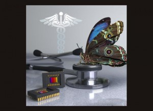 Researchers developed a new camera that mimics the visual system of the morpho butterfly The butterflys eyes contain nanostructures that sense multispectral information, providing an ideal way to acquire both near-infrared and color information simultaneo