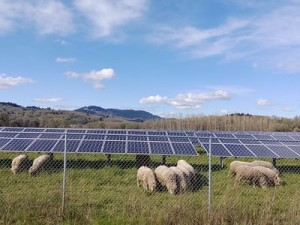 sheep and solar