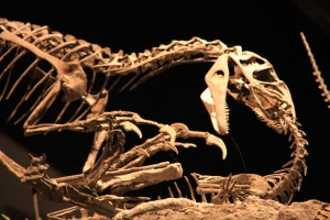 synchrotron imaging technique to examine dinosaur bones Phil Manning, U of Manchester