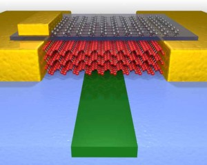 The high-performance photodetector Photo Credit College of Science and Engineering