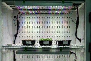 Osrams Phytofy RL connected horticulture research lighting system is comprised of smart lighting software coupled with a unique setup of connected grow light fixtures