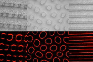 Cephalopod-Inspired Camouflage Material from MIT