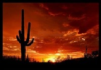 Saguaro National Park, Tucson, Arizona Credit Wikipedia