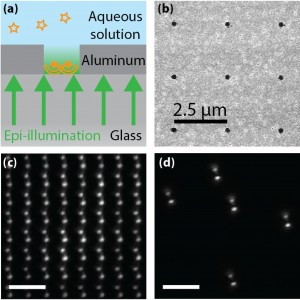 Subdiffraction holes in a NHA function as regularly spaced fluorescent point emitters a Schematic depicting nanohole geometry Wide-field epi-illumination green passes through the glass coverslip into a nanohole etched into a layer of aluminum An aqueous s