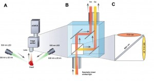 A Optical system configuration with image splitting device positioned in front of a sCMOS camera B Emission of each complementary probe Vm, Ca is separated by wavelength using an image splitting device C Dichroic cube setup with the two emission filters a