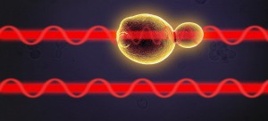 The two light paths are in phase, until one passes through the cell sample As the cell is subjected to stress, it is possible to read changes in its properties through the variations in beam phase offsets Yen StrandqvistChalmers