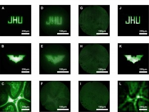 Microendoscope Produces High-Quality Micro-Images