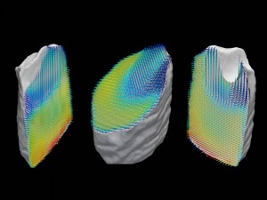 Representation of the orientation of collagen fibers within a tooth sample The samples three-dimensional nanostructure was computed from a large number of separate images recorded by X-ray scattering CT Image Schaff et alNature