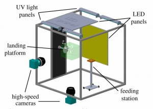 The experimental set-up with a stereoscopic high-speed Mikrotron camera system, a feeding station and a vertical landing platform The green box around the vertical landing platform depicts the viewing domain of the cameras