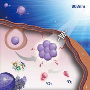 The image shows nanoparticles accumulating into the tumor Light is then used to irradiate the nanoparticles to induce singlet oxygen generation from the photosensitive drugs attached to the nanoparticles, which then kill the tumor without affecting the ot