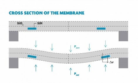 Definition of membrane
