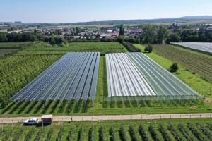 orchard with solar
