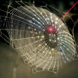 A spiderweb-inspired fractal design is used for hemispherical 3D photodetection to replicate the vision system of arthropods Sena Huh image Download image