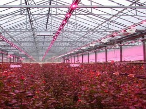 ELED lighting could reduce energy consumption in greenhouse horticulture sector by 50